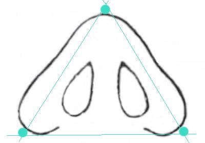 Основание носа в норме имеет форму равностороннего треугольника. сайт пластического хирурга Аганесова Г. А.