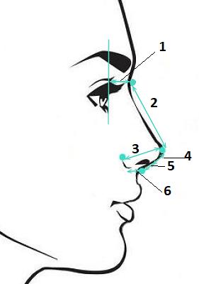 Оценка формы носа, основные расстояния. Сайт пластического хирурга Аганесова Г. А.