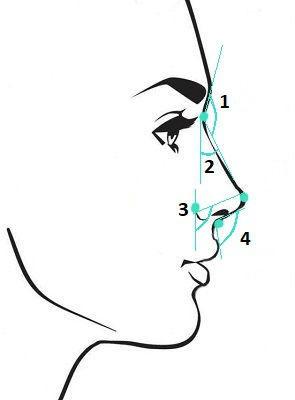 Осмотр носа в боковой проекции, основные углы. Сайт пластического хирурга Аганесова Г. А.
